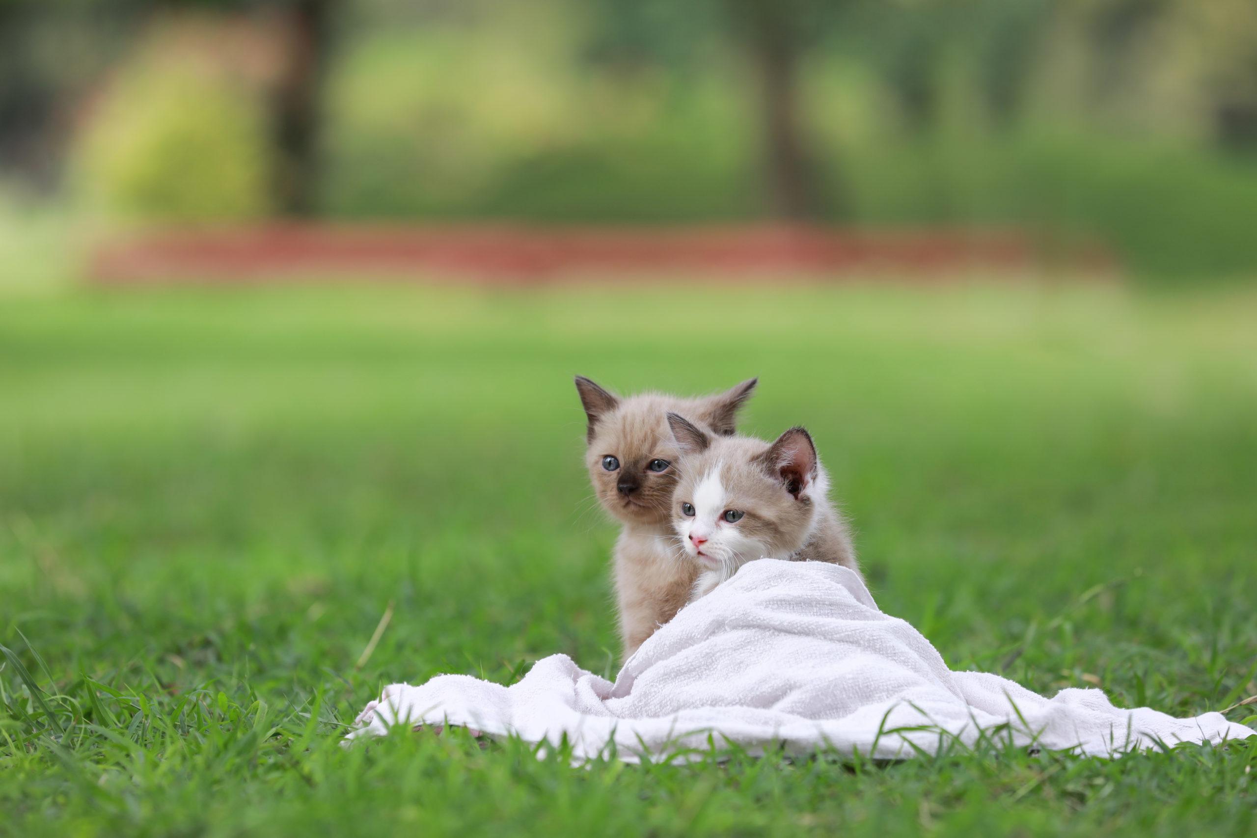 猫の首輪シュシュ:メリット・デメリット