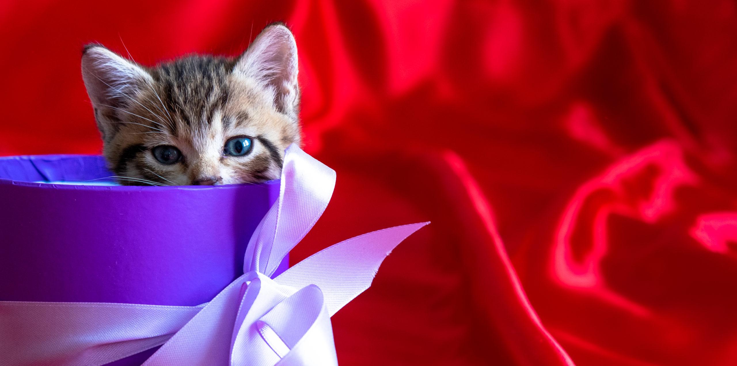 猫の首輪リボン付きのおすすめ10選!4匹と暮らしているボクが厳選