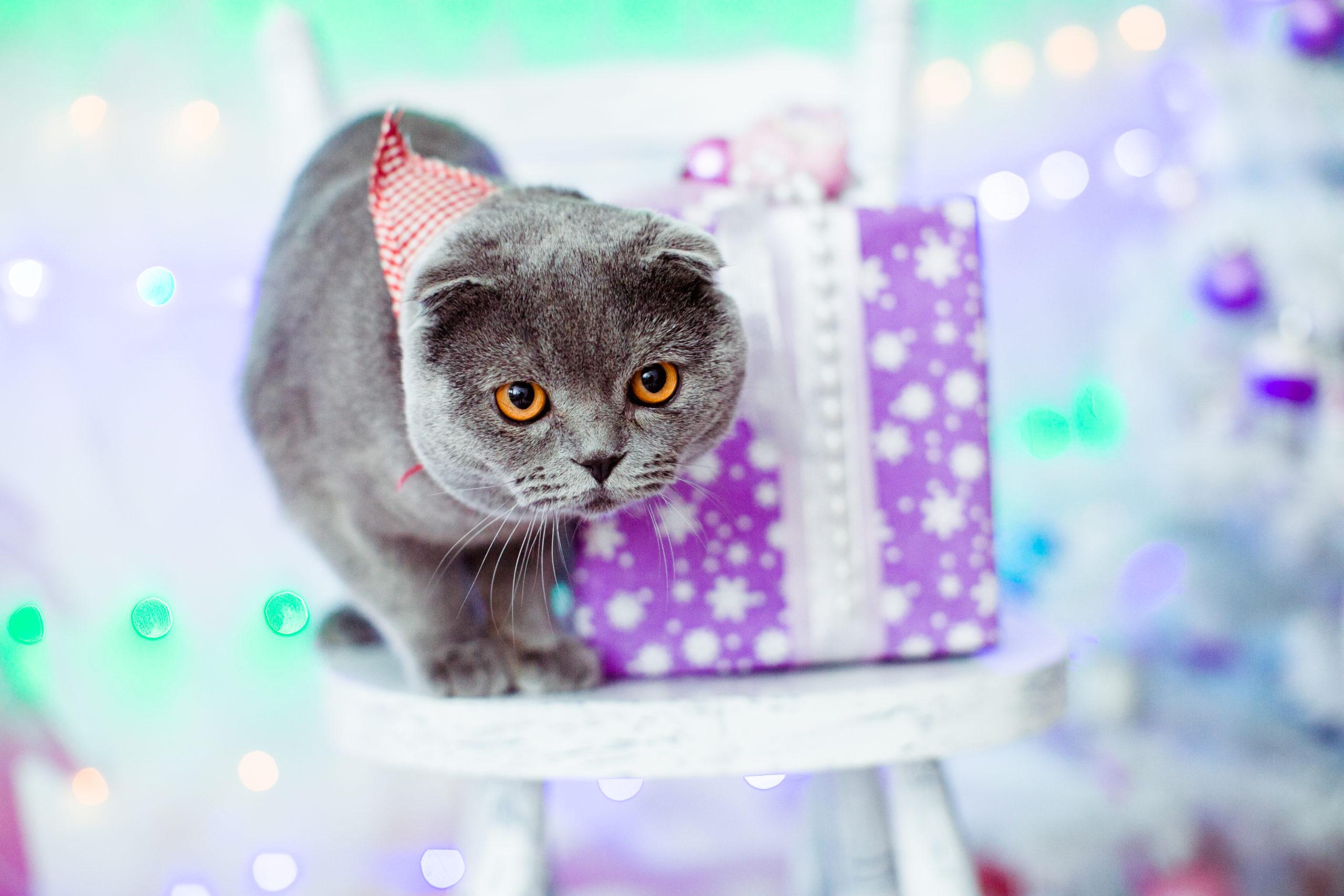 猫のおしゃれな首輪のメリット・デメリット