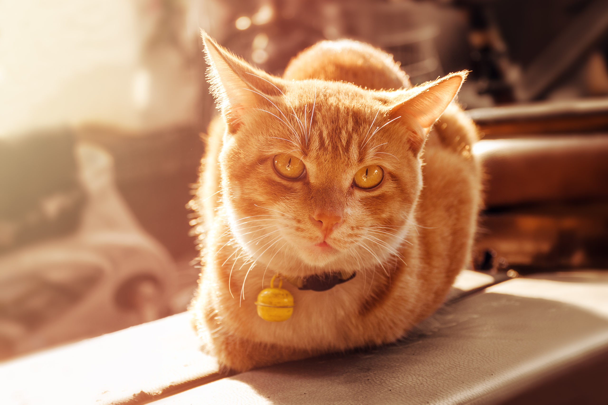 猫の首輪のおすすめ10種!4匹と暮らしているボクが厳選