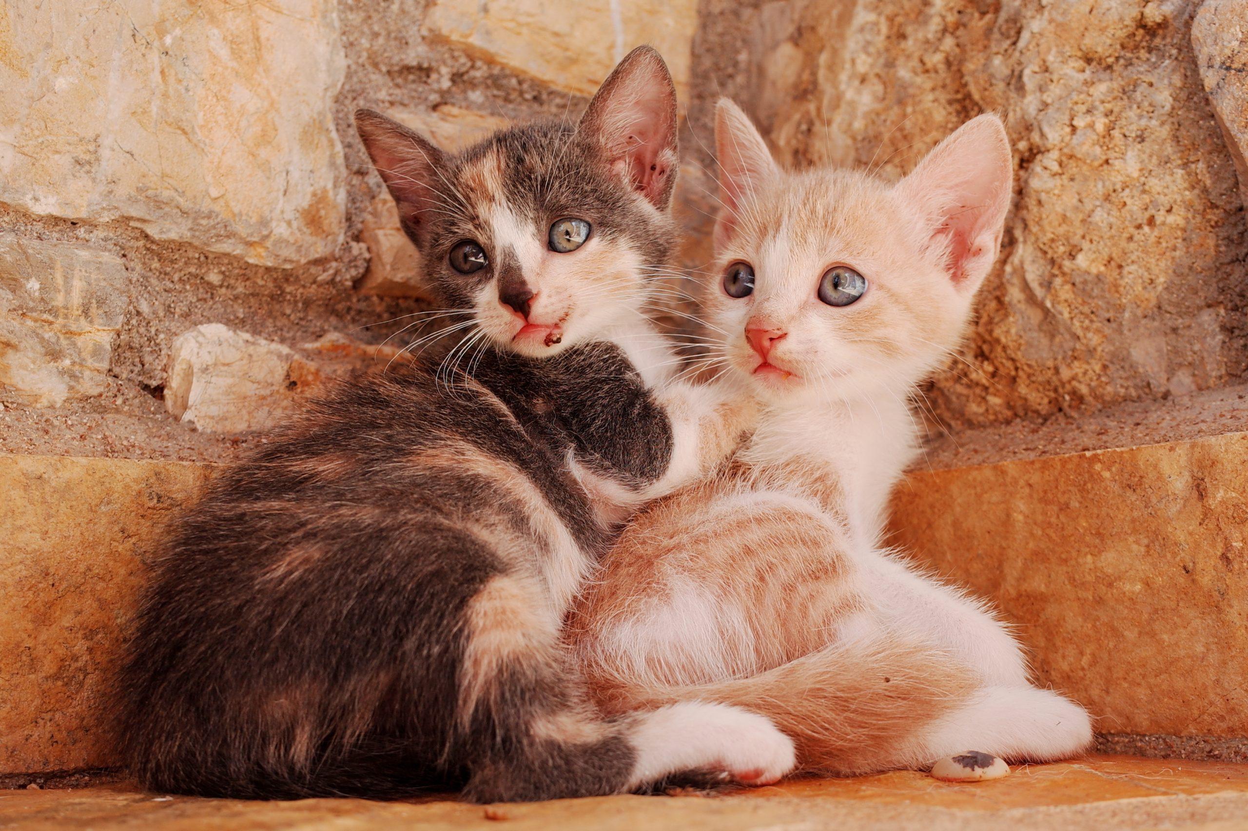 猫の首輪名札付きのおすすめ5選