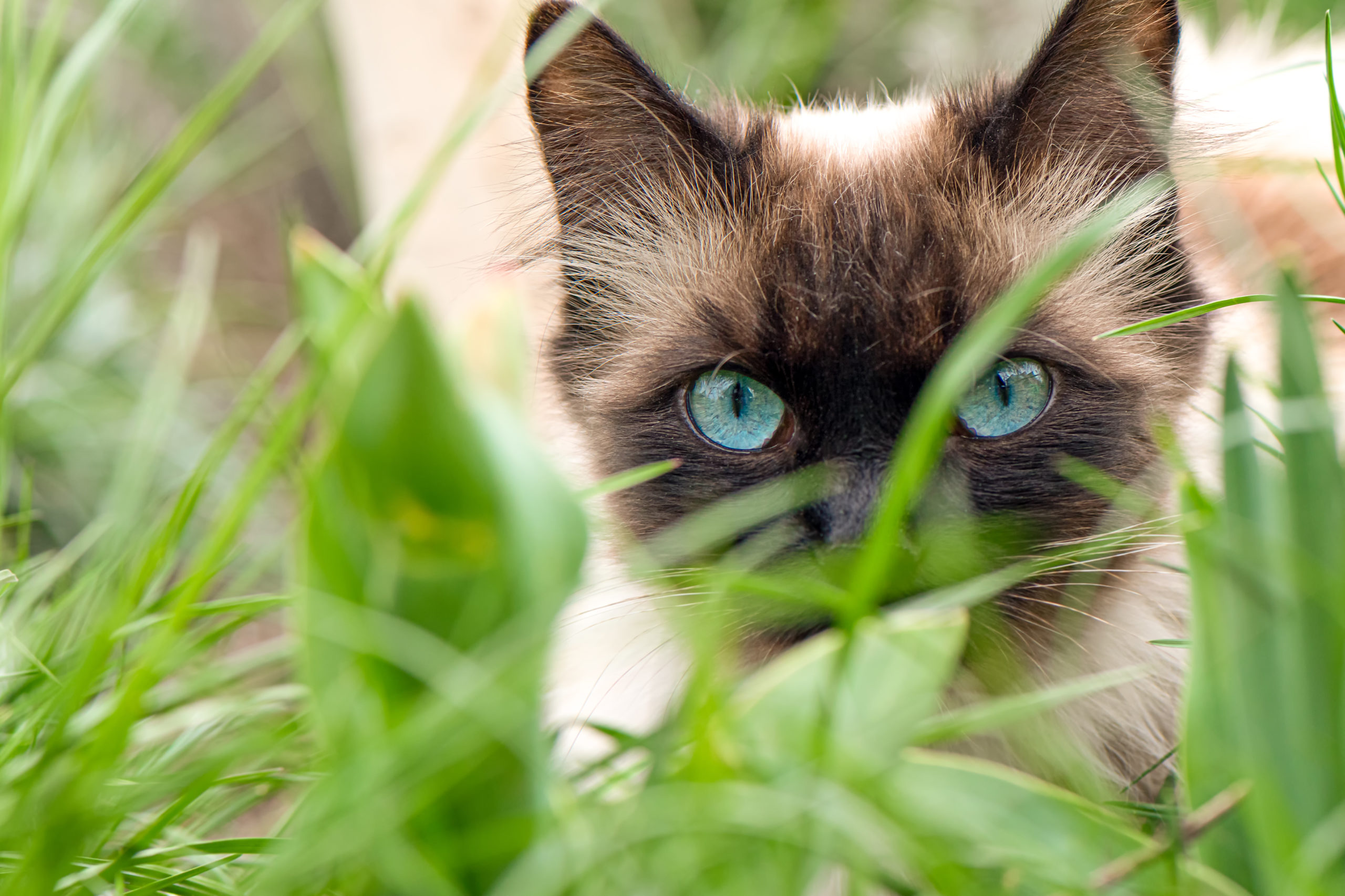 猫草のおすすめ5選【猫草のメリット・デメリットも解説】