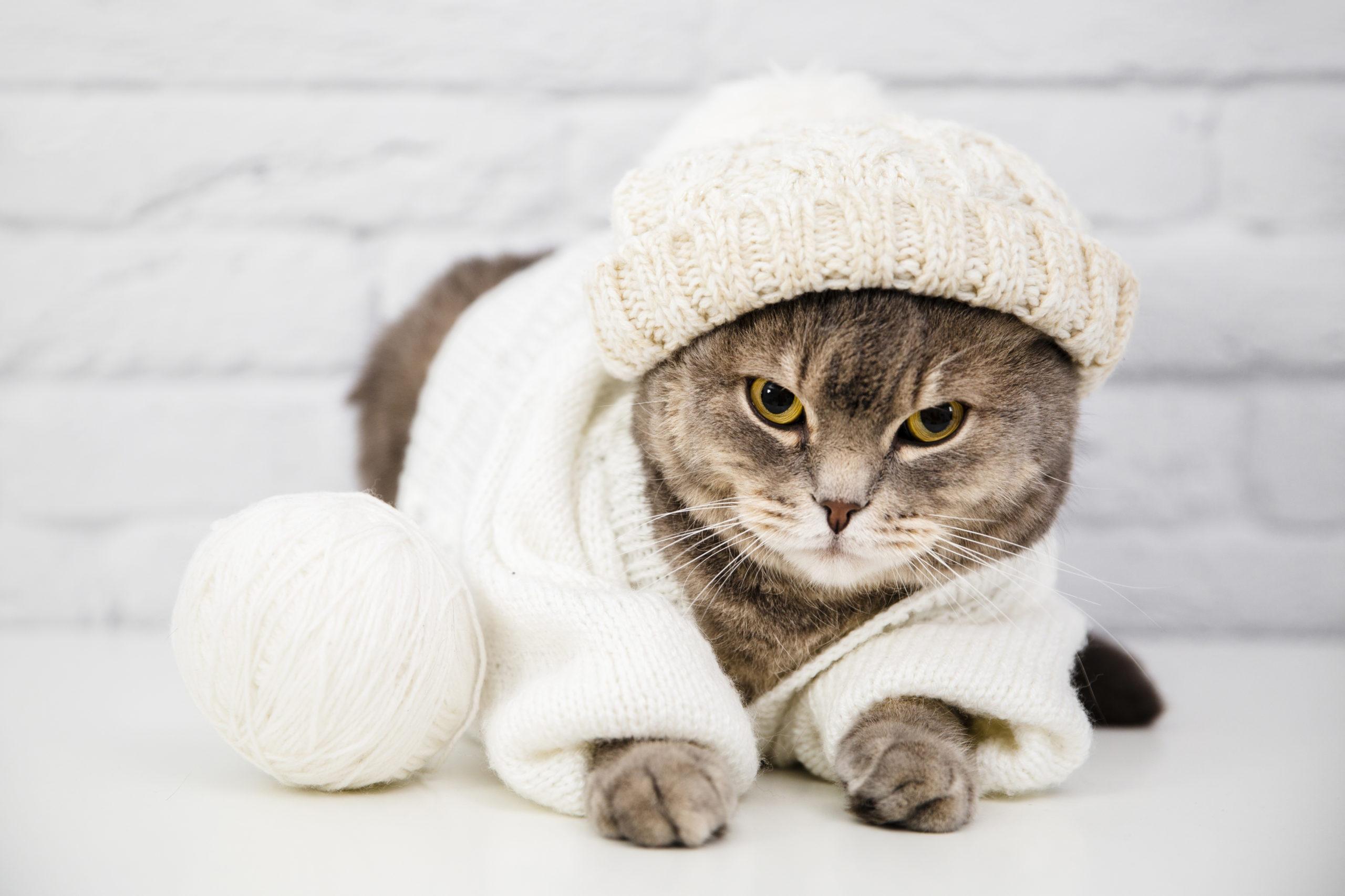 猫の首輪シュシュのおすすめ5選【4匹の猫と暮らす僕が厳選】