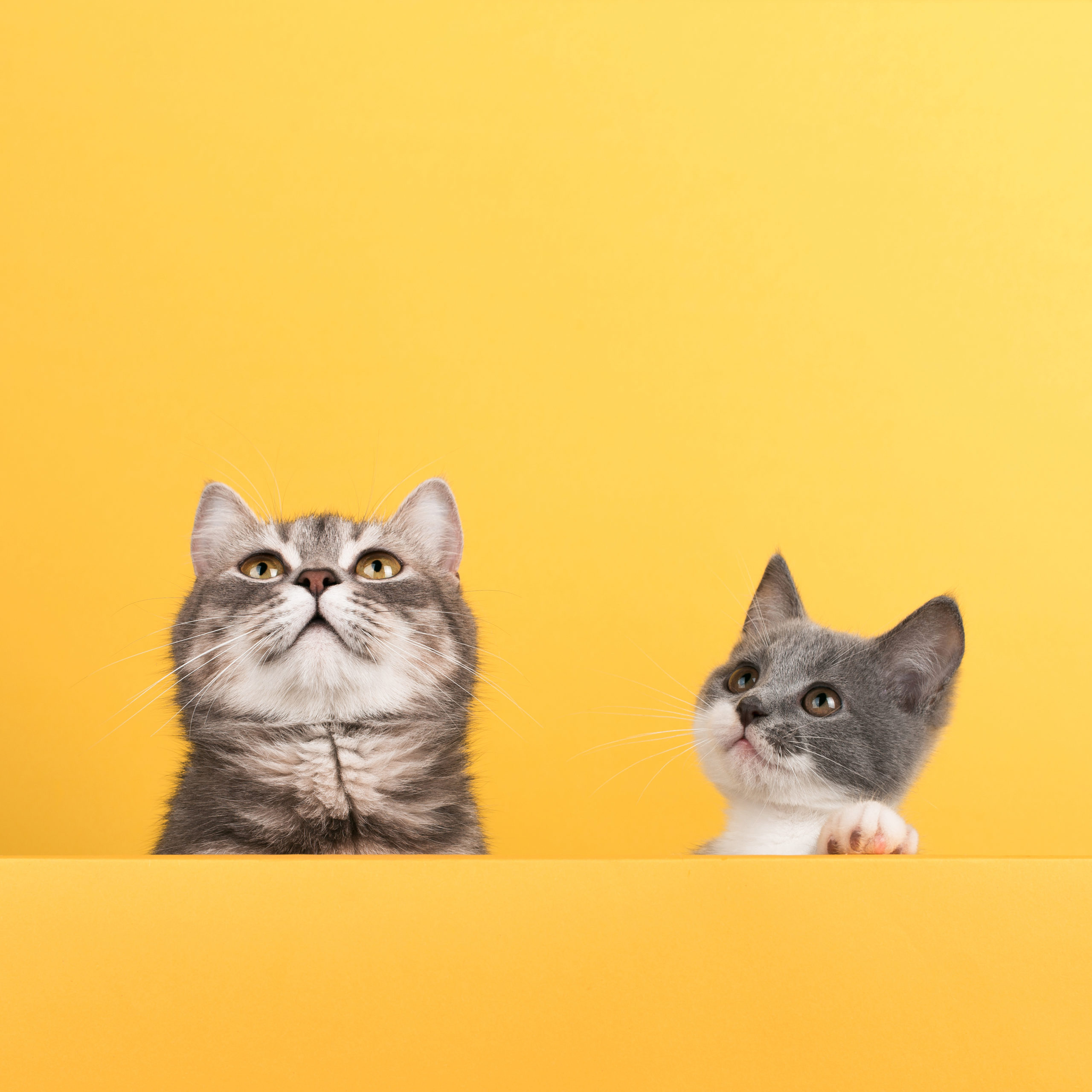 猫の首輪名札付き:メリット・デメリット