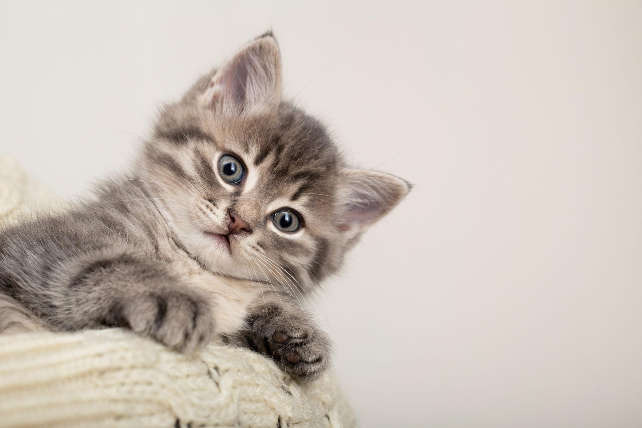 猫の首輪コットンのおすすめ5選「4匹と暮らす僕が厳選」