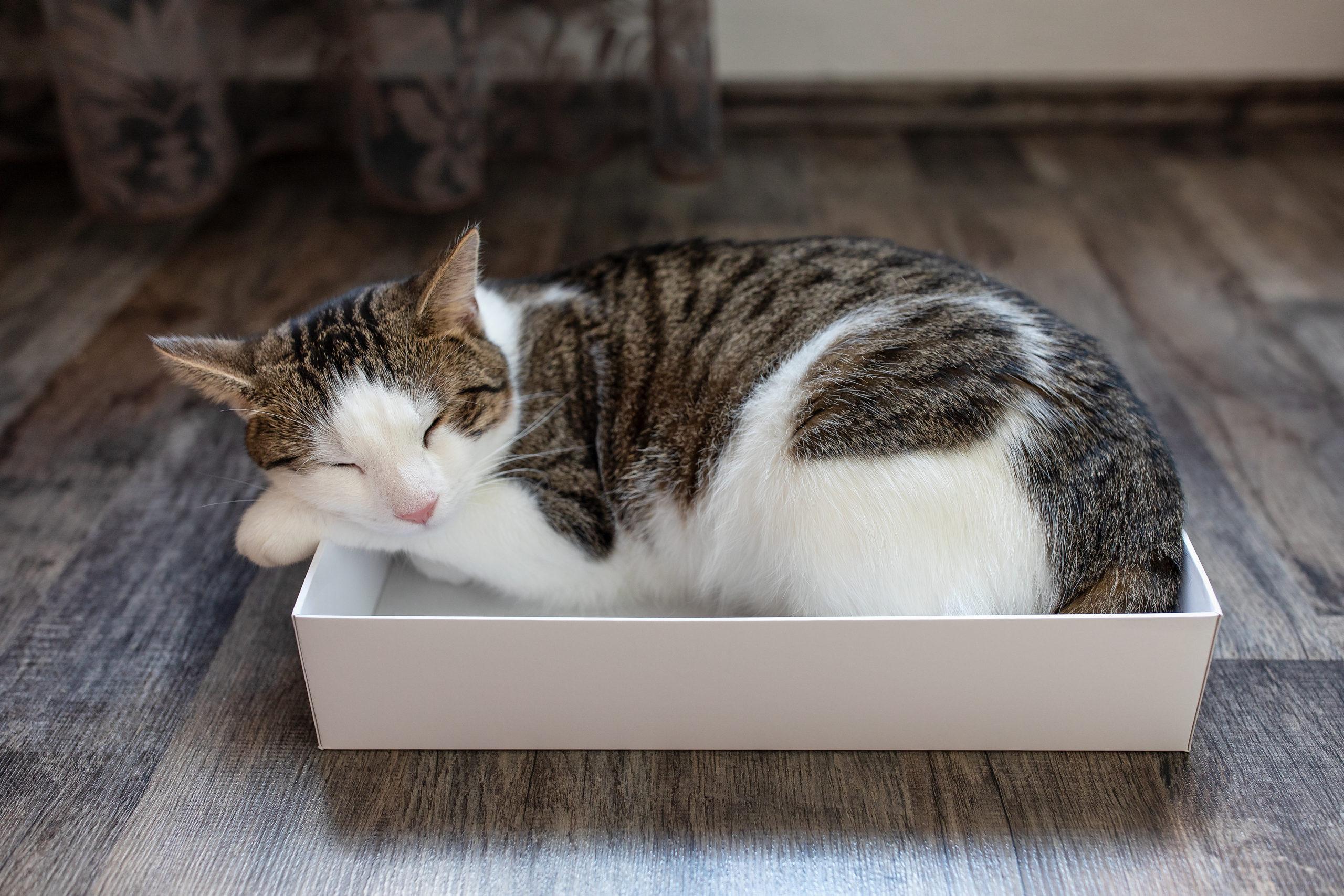 猫の安全な首輪10選【4匹の猫と暮らす僕が厳選】