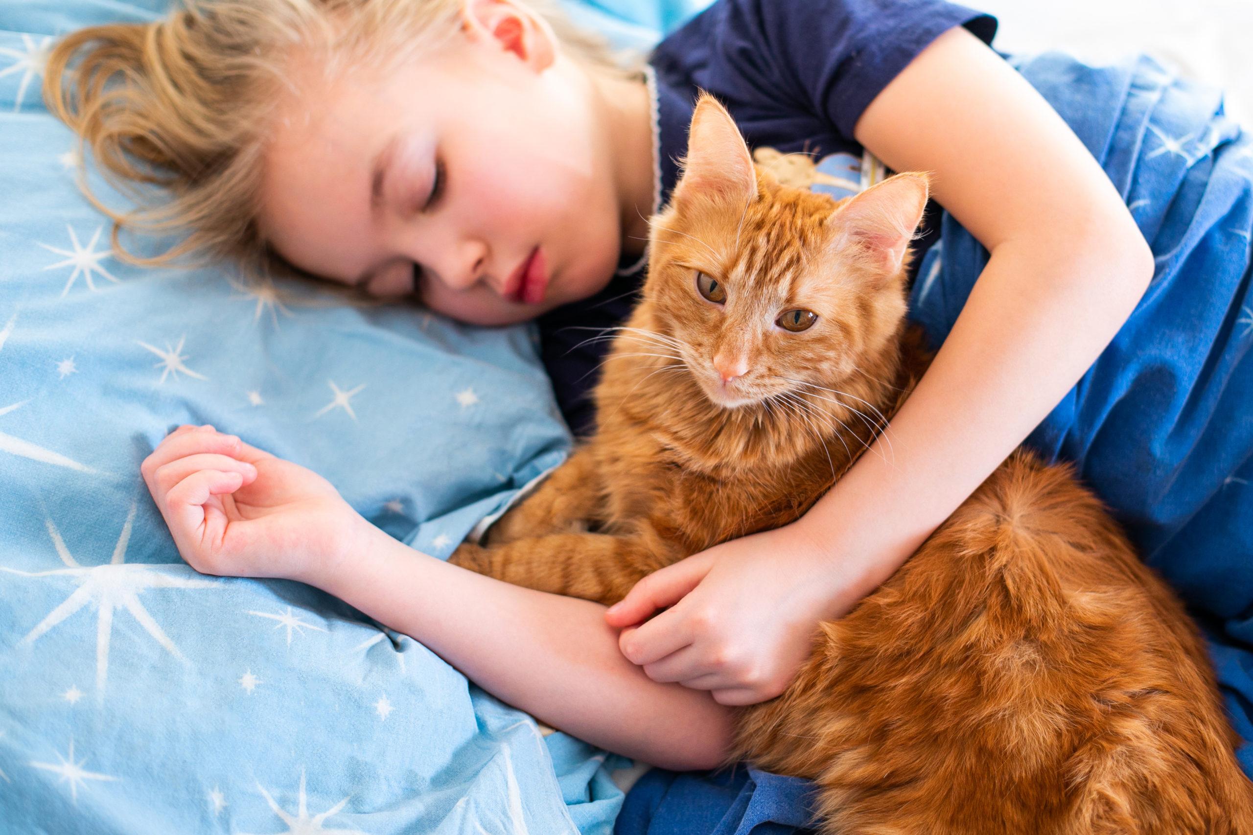 猫が寝る位置で性格が違う?【寝る位置で分かる5つの性格】