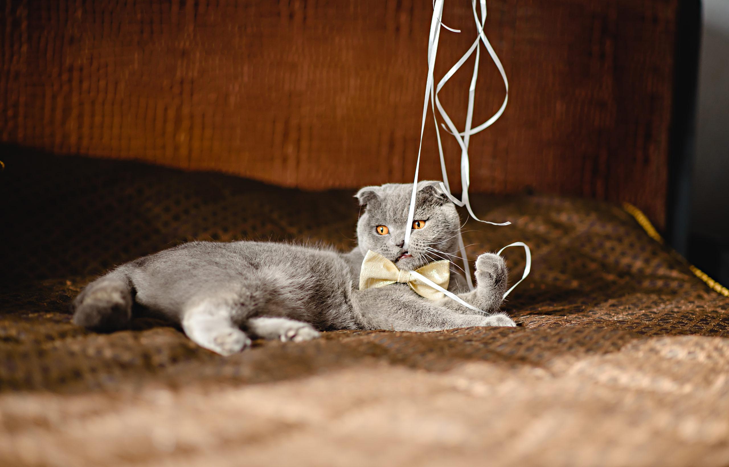 猫の首輪リボン付き:メリット・デメリット