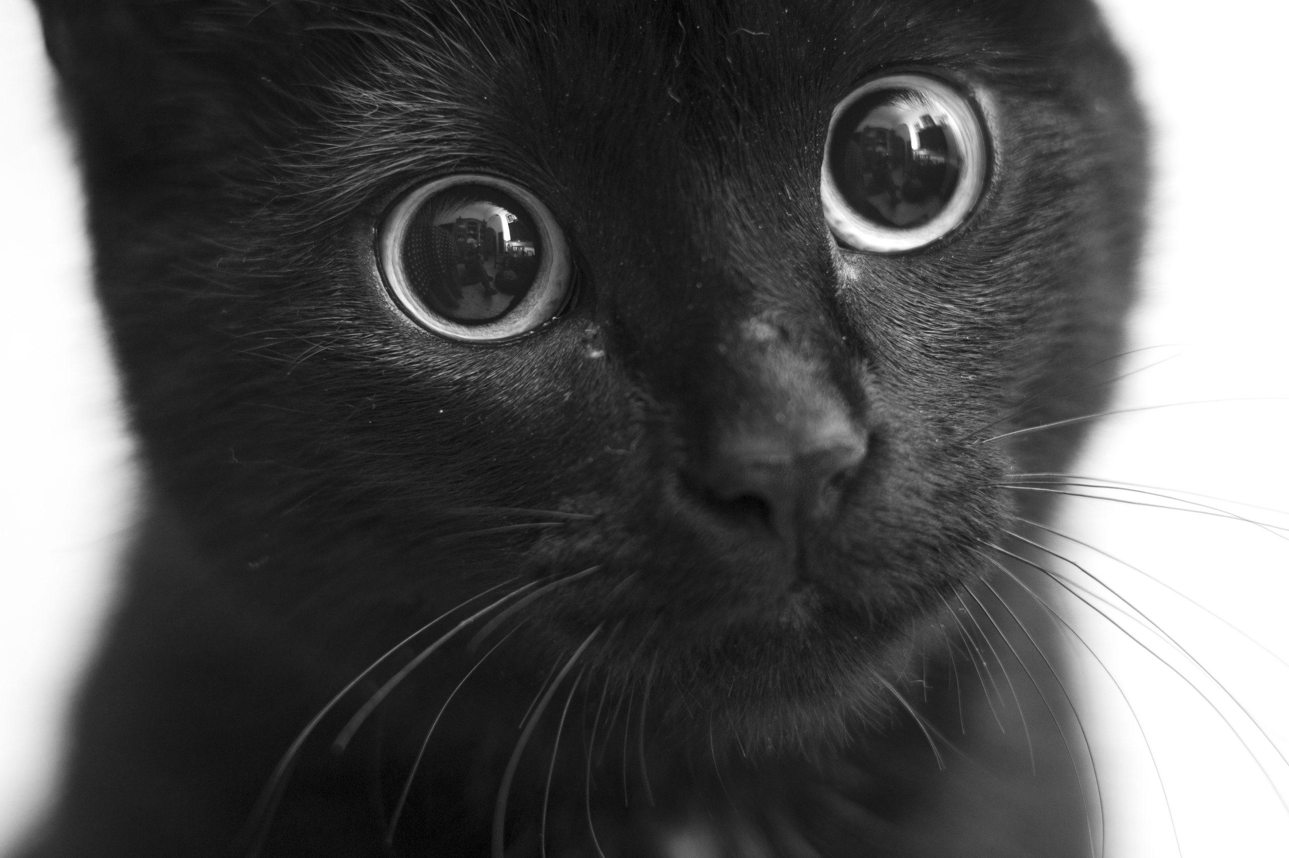 猫の目が変化する5つの理由【子猫の時と成猫の時は違う目の色】