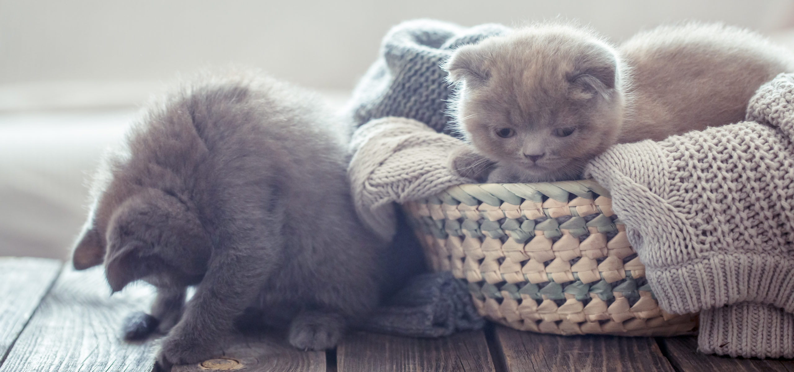 猫の首輪シュシュのおすすめ5選