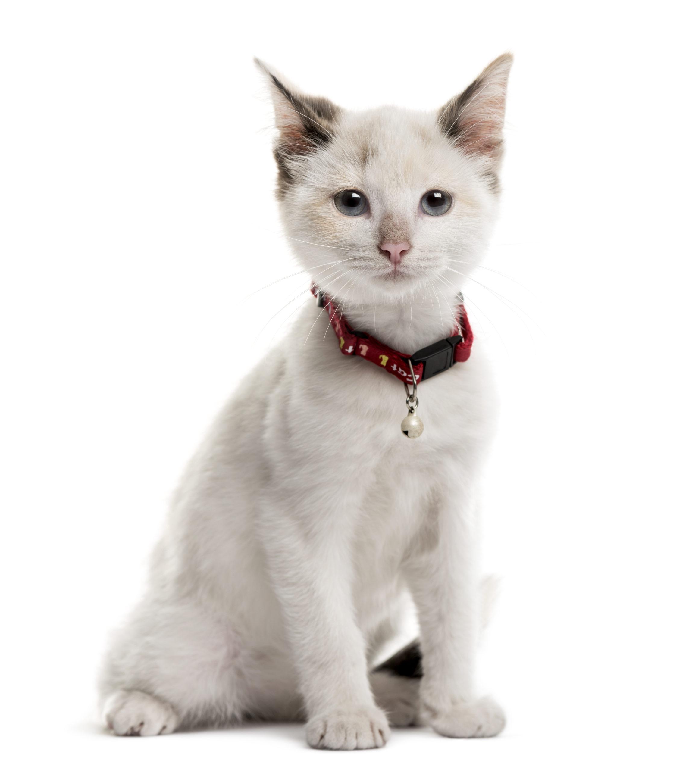 猫の首輪鈴つき:メリット・デメリット