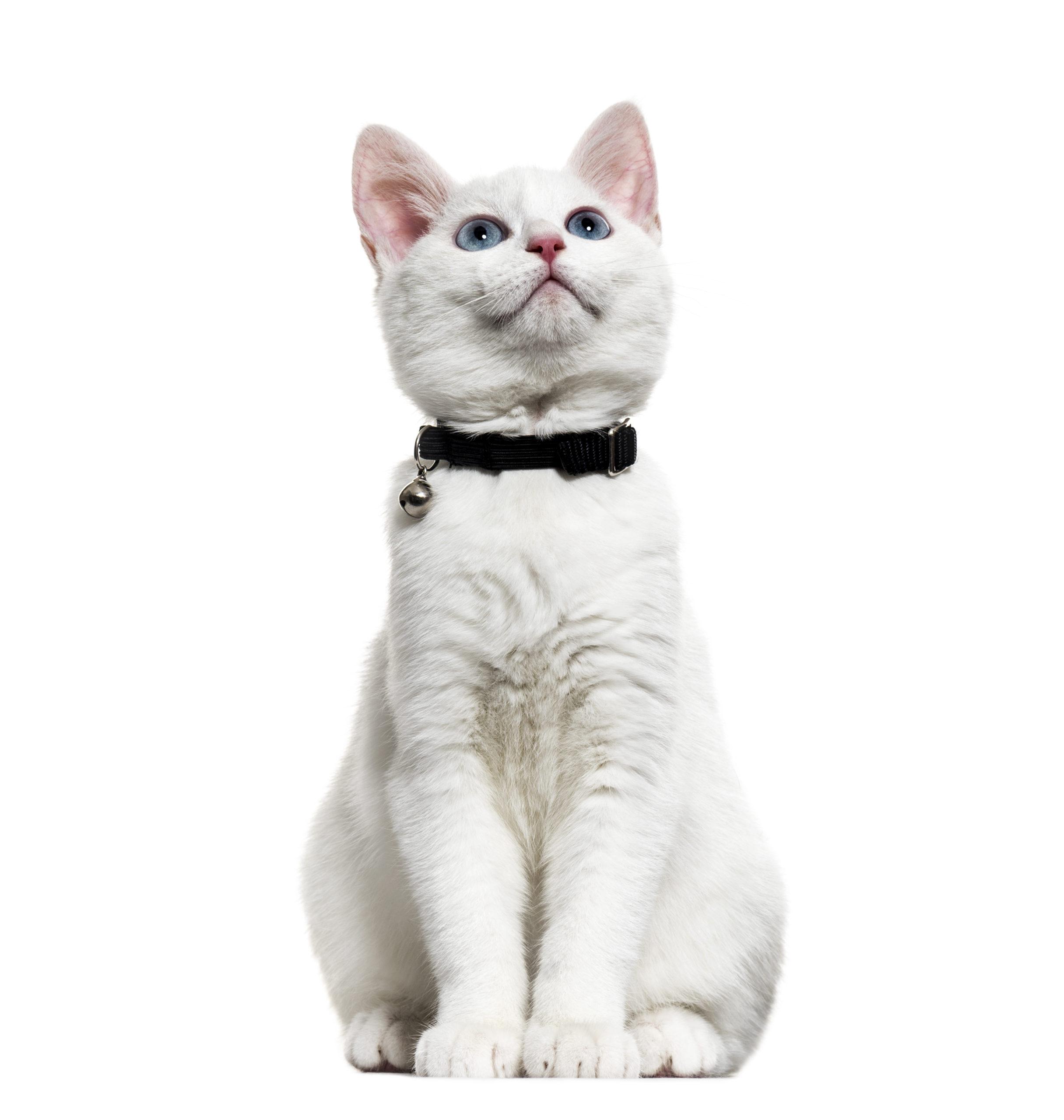 猫の首輪鈴つきのおすすめ5選【4匹の猫と暮らす僕が厳選】
