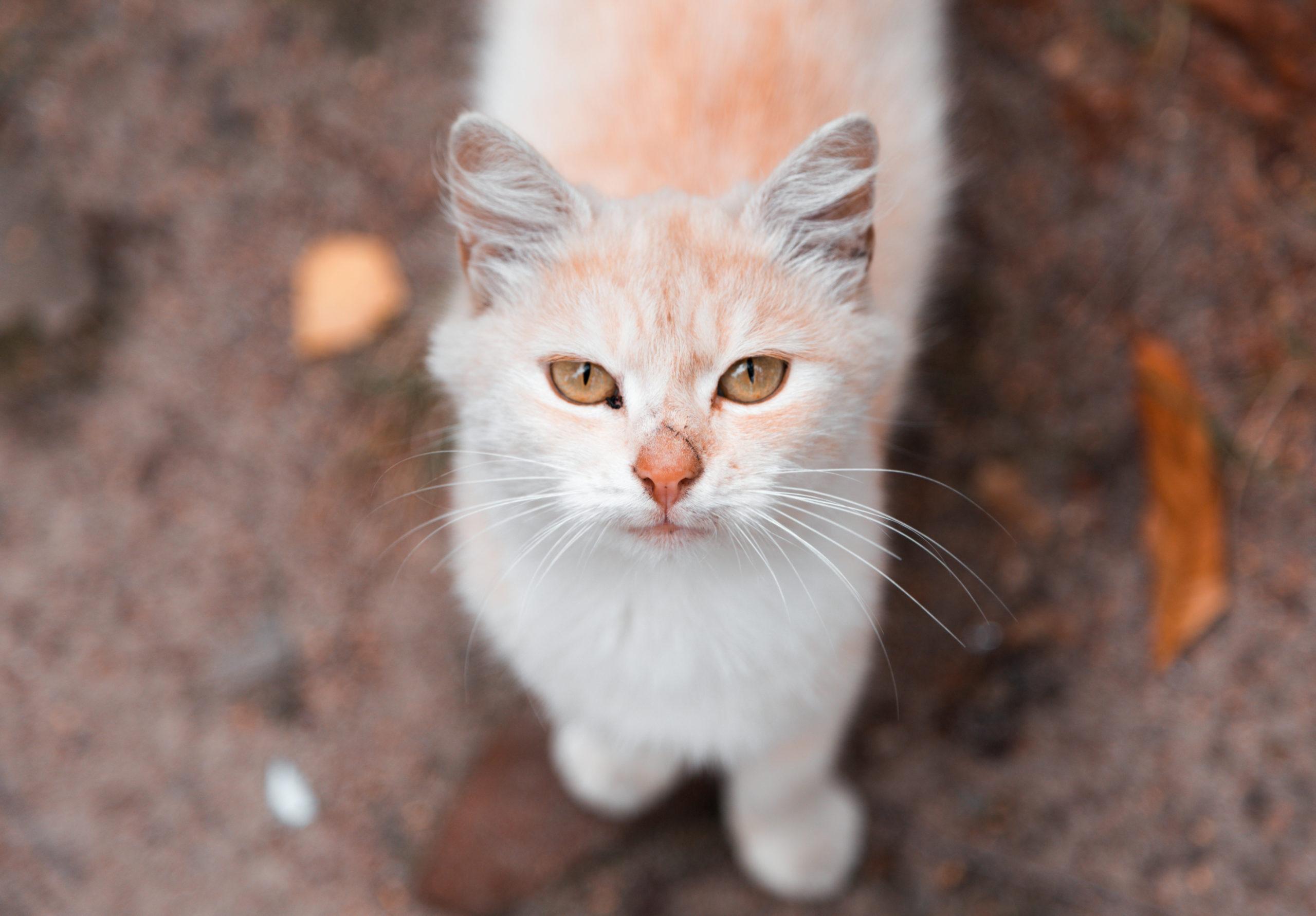 猫の迷子札のおすすめ。4匹と暮らしているボクが厳選