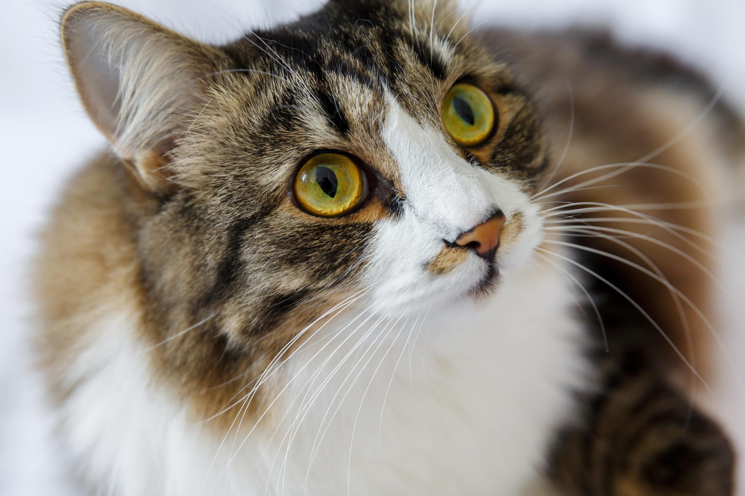 猫のひげの役割とは【猫のひげは高性能のセンサー】