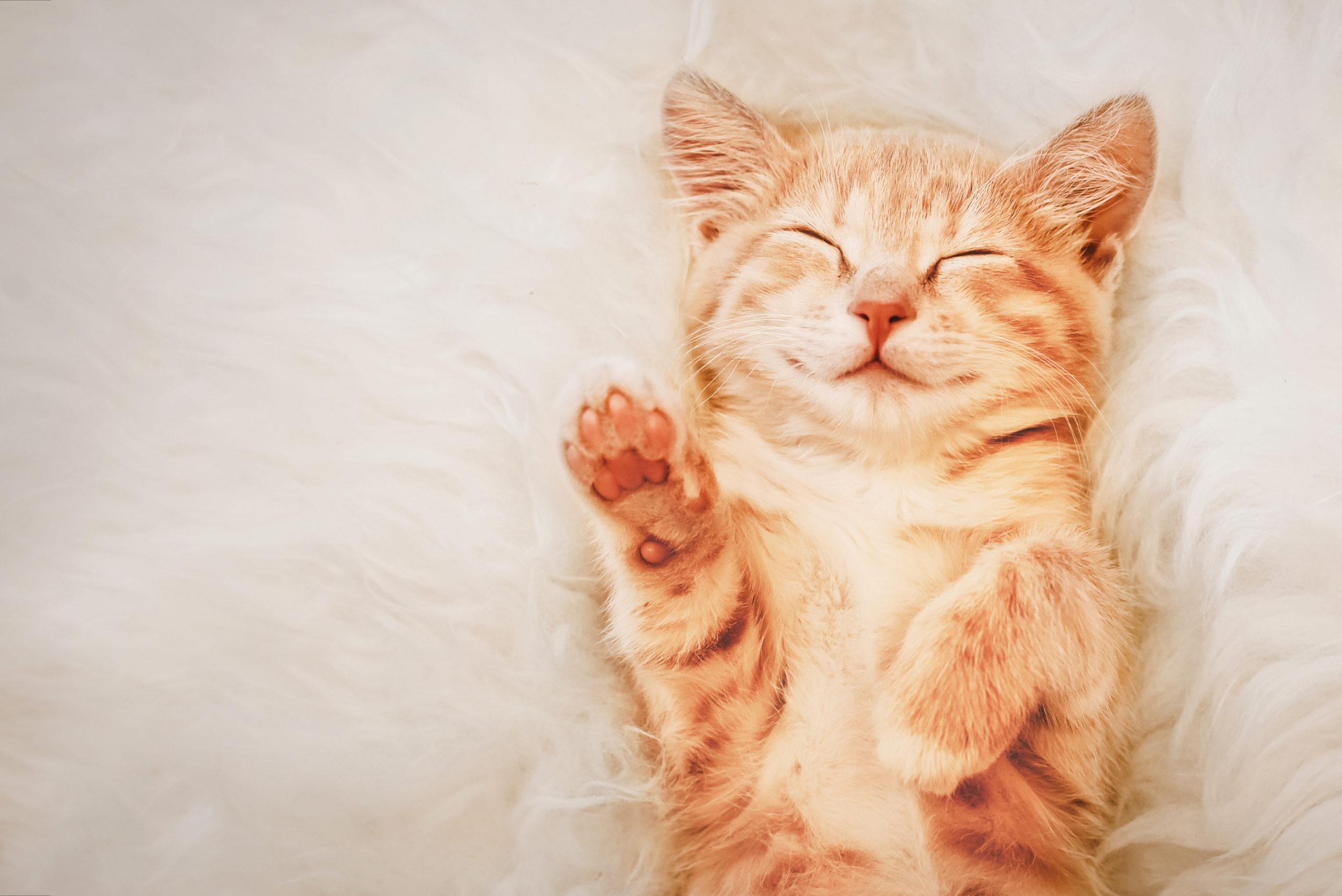 猫のふみふみに伴う3つの行動