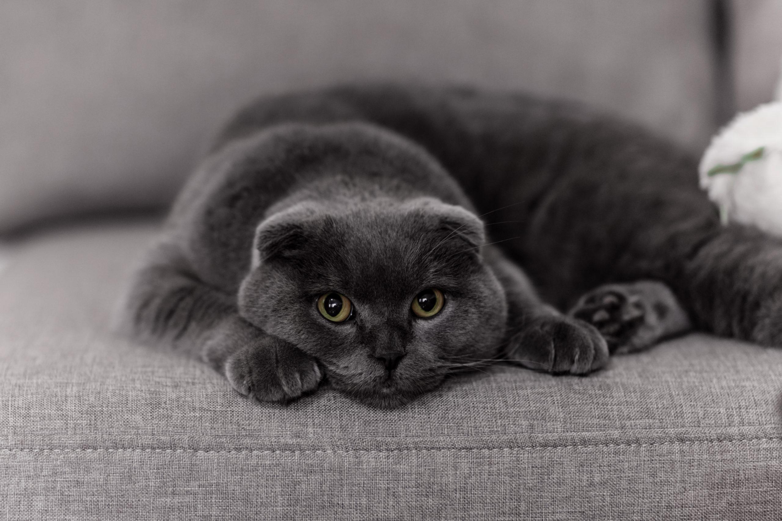 オス猫がふみふみする3つの理由【去勢前と後で意味が変わる】