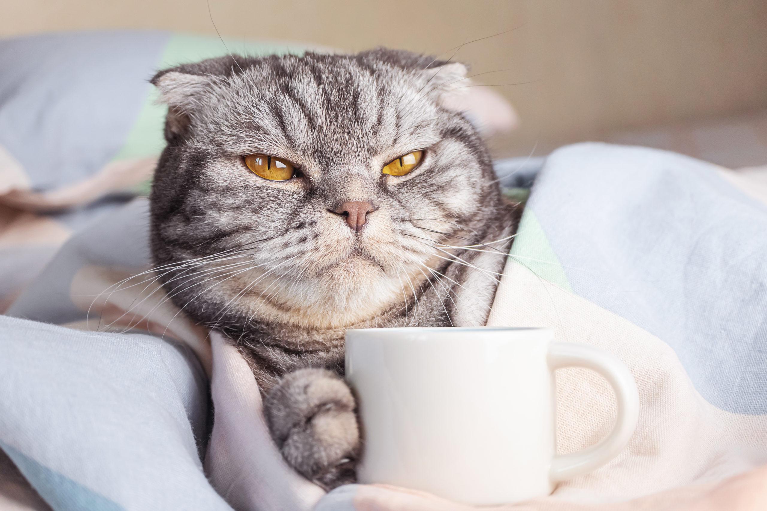 猫のしゃっくりの3つの原因とは?【可愛いしゃっくりにはご注意】