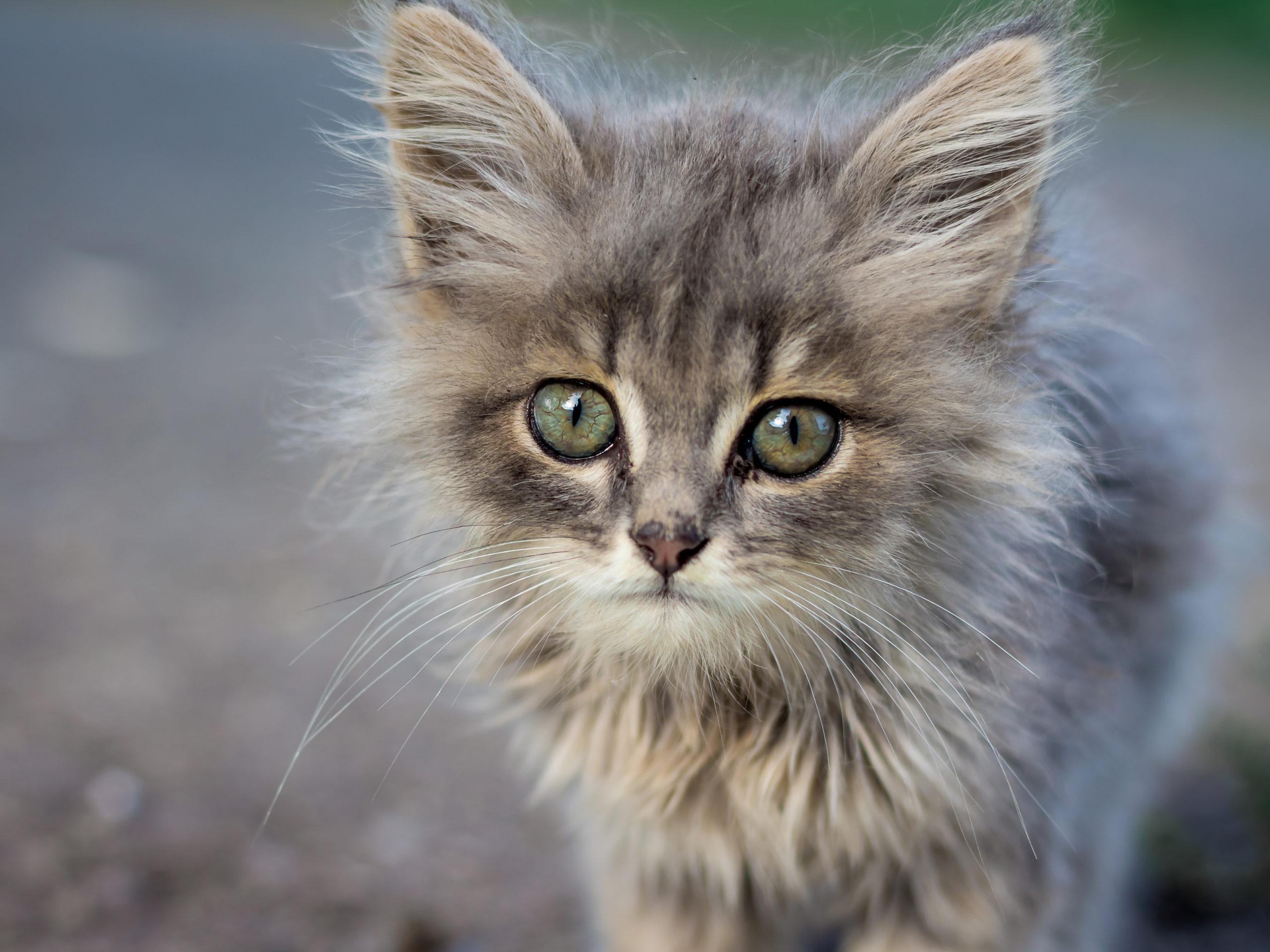 猫のひげを切るとどうなるか?