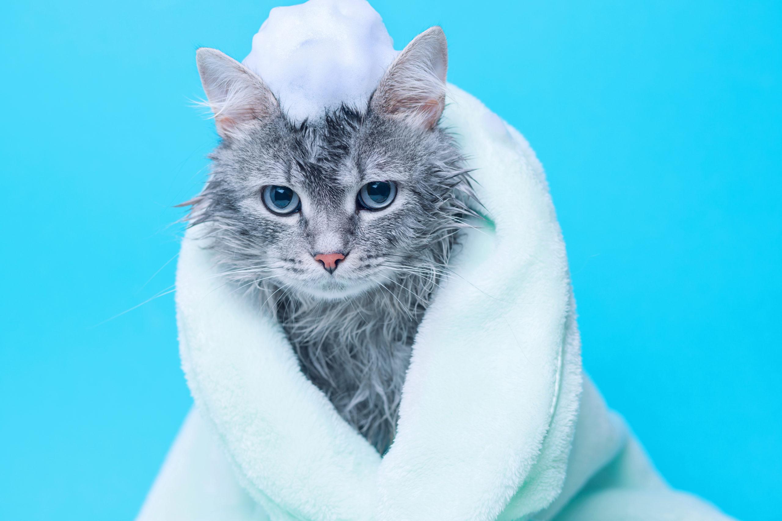 猫のお風呂の温度での注意点2つ